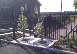 Filterra Bioretention systems at Barry South Wales